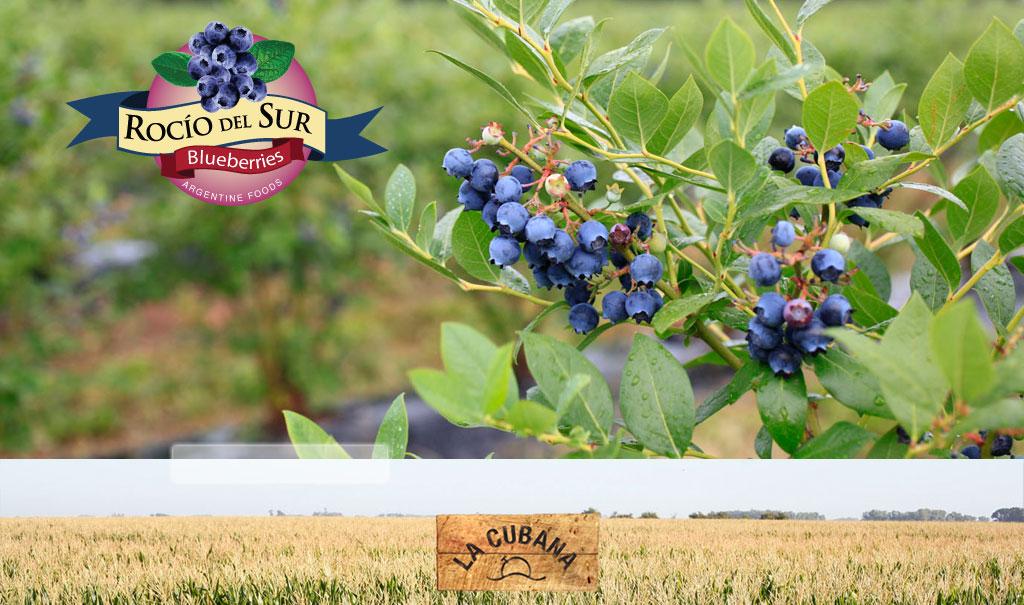 argentine berries